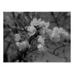 cherry blossoms in the sky, black and white print