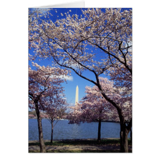 Cherry Blossoms in Washington D.C. Card