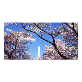 Cherry Blossoms in Washington D.C. Personalized Photo Card