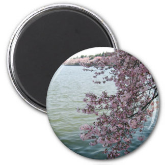 Cherry Blossoms in Washington DC Magnet