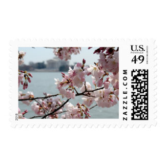 Cherry Blossoms in Washington DC Postage