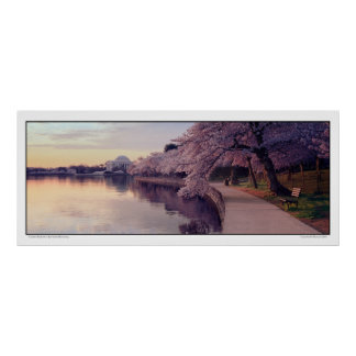 Cherry Blossoms- Jefferson Memorial- Panoramic Poster