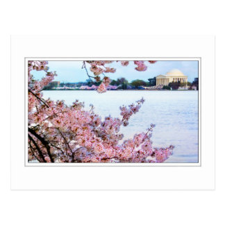 Cherry Blossoms - Jefferson Memorial Postcard