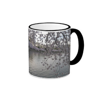 cherry blossoms late afternoon ringer mug