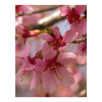 Cherry Blossoms Letterhead Template