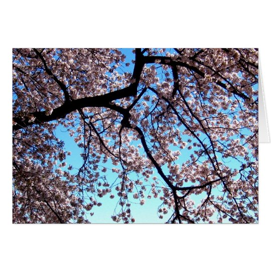Cherry Blossoms * Love Card