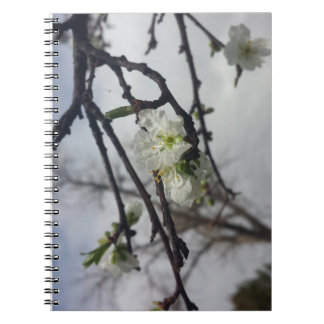 Cherry Blossoms Note Books