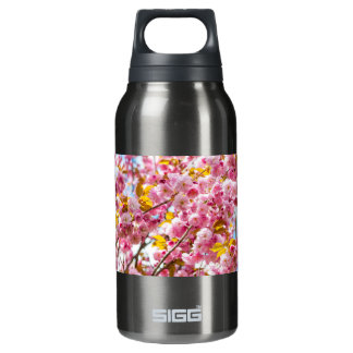 Cherry blossoms on spring cherry tree branches insulated water bottle