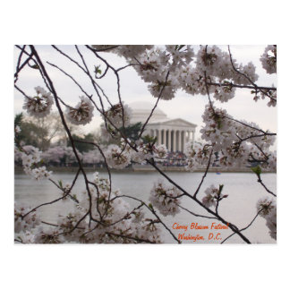 Cherry Blossoms on the Tidal Basin Postcard