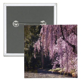Cherry Blossoms On Trees Over Water Pinback Button