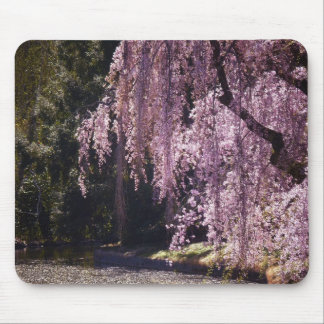 Cherry Blossoms On Trees Over Water Mouse Pad