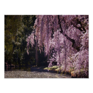 Cherry Blossoms On Trees Over Water, Small Poster
