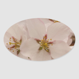Cherry Blossoms Oval Sticker