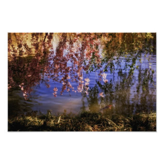 Cherry Blossoms Over a Pond Poster