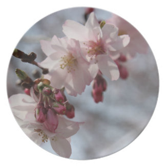 Cherry Blossoms Photo Plate