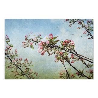 Cherry Blossoms Art Photo