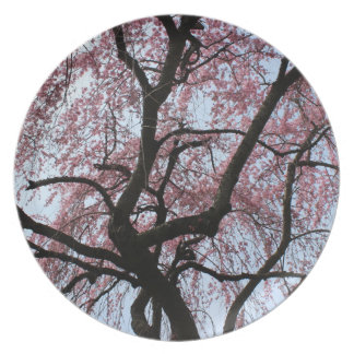Cherry Blossoms Plate