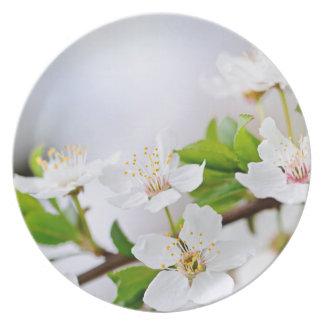 Cherry blossoms dinner plates