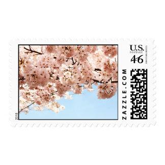 Cherry Blossoms Stamp