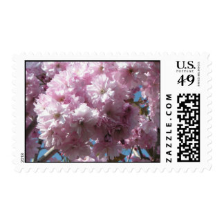 Cherry blossoms postage stamps