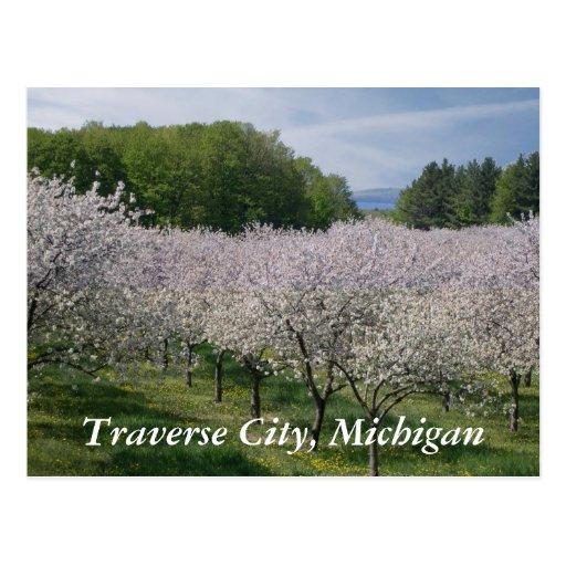 """Cherry Blossoms"" Postcard"