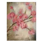 Cherry Blossoms Postcards