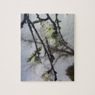 Cherry Blossoms Puzzles