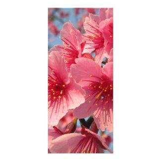 Cherry Blossoms Rack Card