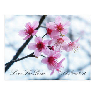 Cherry Blossoms - Save The Date Postcard