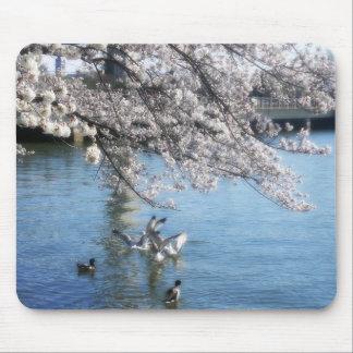 Cherry Blossoms Simplicity Mousepad
