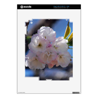 Cherry blossoms iPad 2 decal