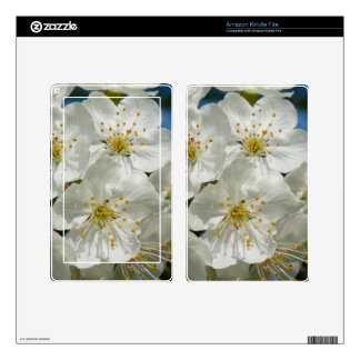 Cherry Blossoms, Spring Kindle Fire Decal