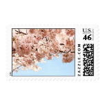 Cherry Blossoms Stamp