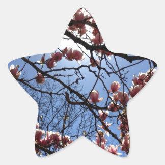 Cherry blossoms star sticker