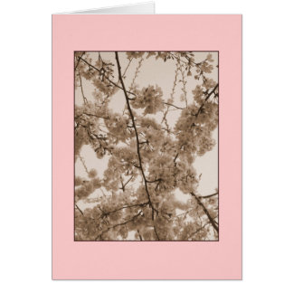 'Cherry Blossoms' Tinted Blank Note Card