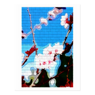 Cherry Blossoms Tree Postcard