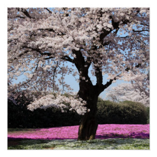 Cherry Blossoms Vines Spring Love Peace Destiny Poster