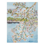 Cherry Blossoms Washington DC Painterly Watercolor Postcard