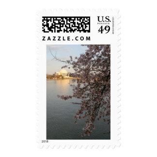 Cherry Blossoms Washington DC Stamp