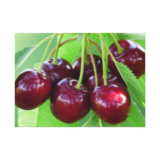 Cherry bunch on tree stretched canvas prints
