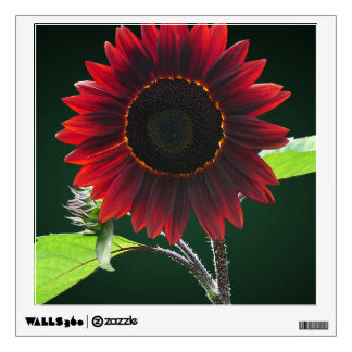 Cherry Chocolate Sunflower Closeup Wall Graphics