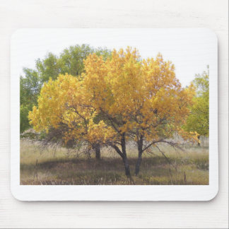 Cherry Creek State Park Colorado Trees Mouse Pad