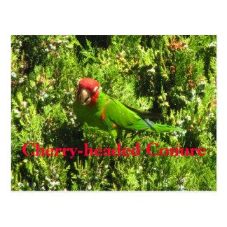 Cherry-headed Conure Postcard