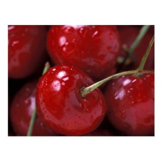 Cherry Postcard