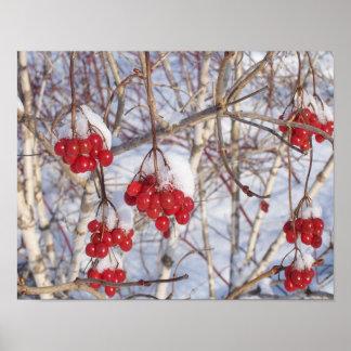 Cherry Snow Cones Poster
