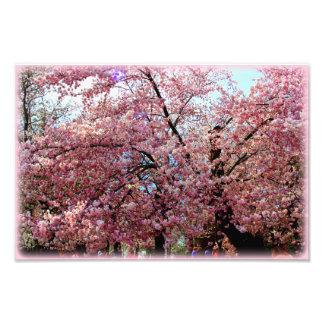 Cherry Tree 8x10 Print Photo Print