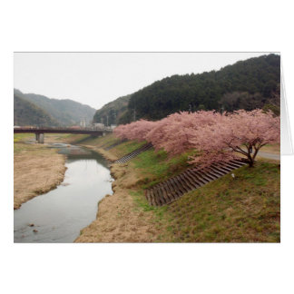 Cherry tree blossoms in Japan Card