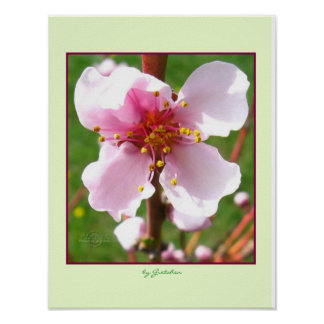 Cherry Tree Blossoms Poster by gretchen