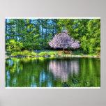 Cherry Tree Blossoms Print
