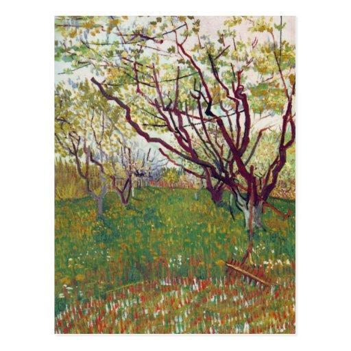 Cherry Tree by Vincent van Gogh Postcard
